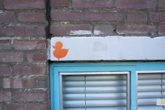 orange ducky