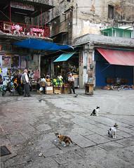 Stray kittens, Palermo/Sicily, Italy