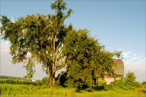 tree barn raw michigan mulliken littlevenice • joeldinda sunfield 1v1 150365
