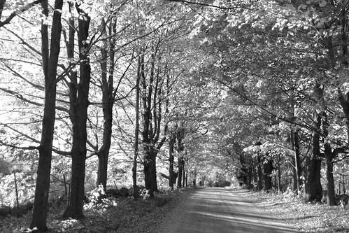 rurallandscape dirtroad blackwhite fall trees nh webster