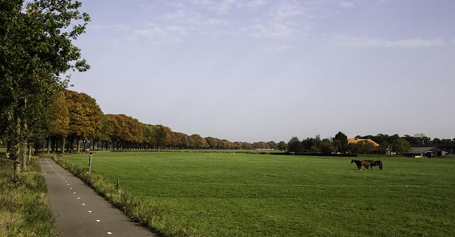 A long line of autumn