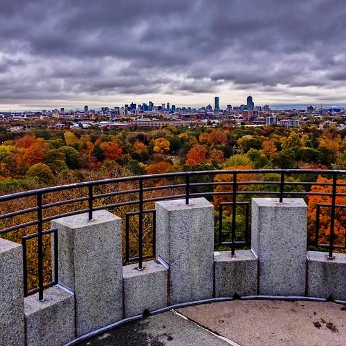 mountauburncemetery boston leaves massachusetts newengland fall foliage