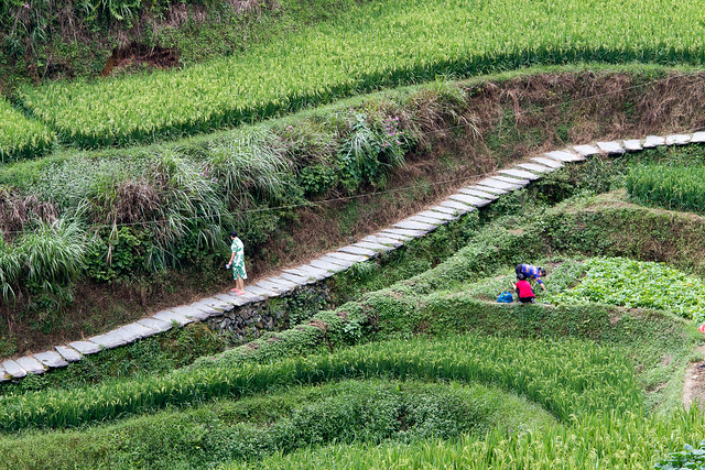 rice terrace - 1