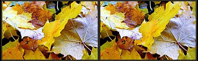 ... Autumn leaves ...