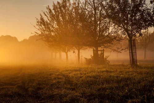 sonnenaufgang sunrise fog