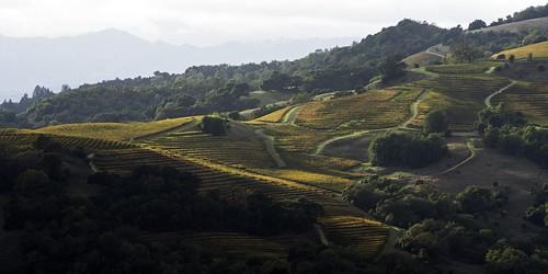 sonoma wine vineyards fall autumn shadows