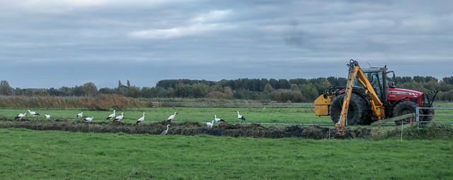 Stork stalkers