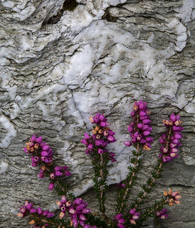 Heather and quartzite   by johnkaysleftleg