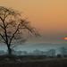 Morning sun by Adelino Goncalves