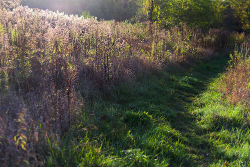 morning color sunrise sun purple path walk massachusetts newengland autumn grass green chancyrendezvous davelawler blurgasm lawler