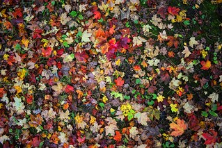 Autumn Quilt | by HAVE A HAPPY HOLIDAY!!!