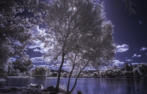 channelswapping infrared infraredphotography ir convertedinfraredcamera lindolake lakeside water clouds sky backlit backlighting nature naturalbeauty