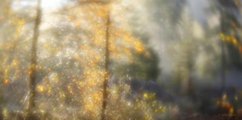 lensbaby autumncolors autumnleaves autumn trees