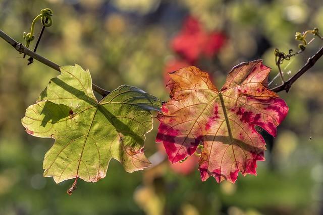 *Autumn Colors* - *Herbstfarben*