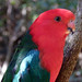 Birds of Eden, WesternCape, South Africa