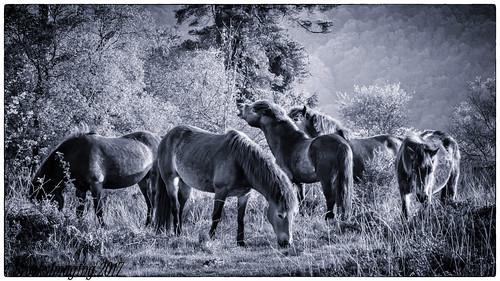 fujixt2 fuji100400mmf45tof56 exmoor haddonhill pony