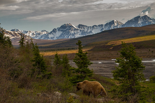 Photographing America: Denali cover image