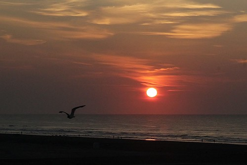 sunrise bird ocean sky beach outdoor nature naturallight wildwood a000635