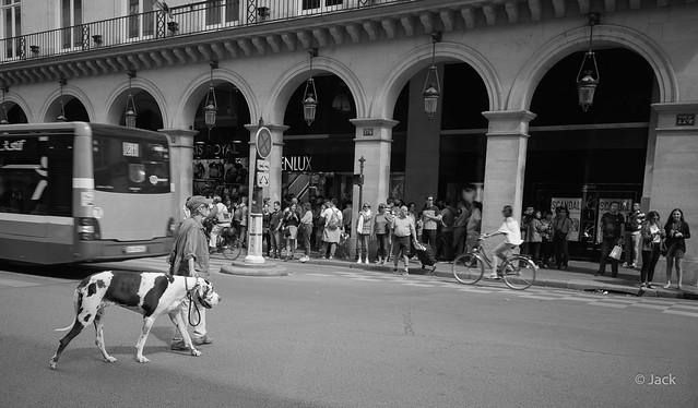 un chien dans la ville