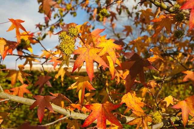 Autumn Dulwich