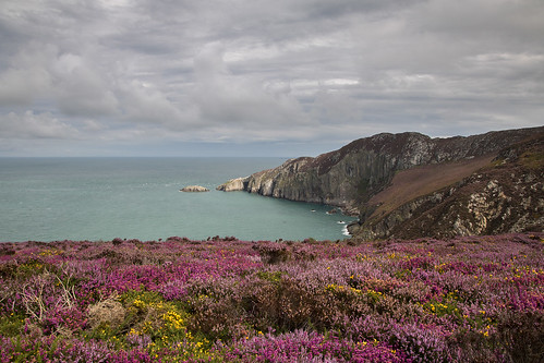 Summer colour on Anglesey | by johnkaysleftleg