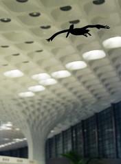Airport - Mumbai - Pedro