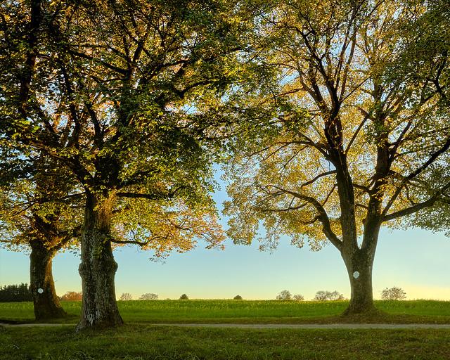 Autumnal Beauties