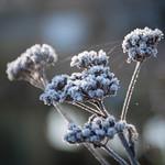 frost17-14 - av Nilla53