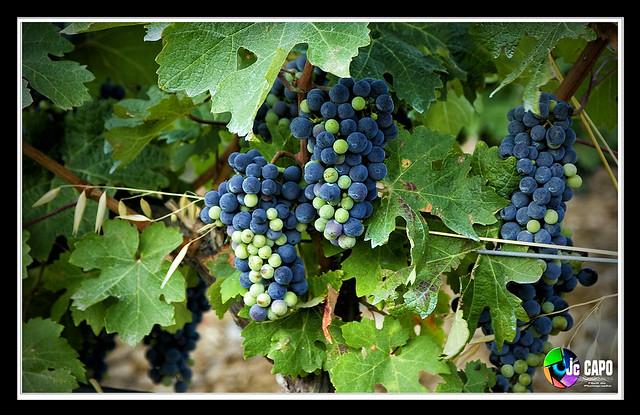 Les raisins.