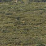Elk foraging in Willow Flats
