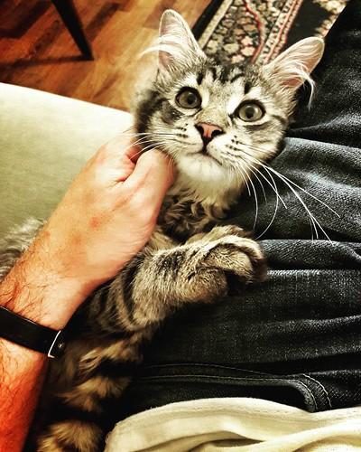 The cat #pet #cat #look #fun #instadaily #followme #instafollow #colorful #pretty #life #family #cats #catsagram #kitten #Kitty #kittens #pets #animal #animals #petstagram #catoftheday #furry #adorable   by Mario De Carli