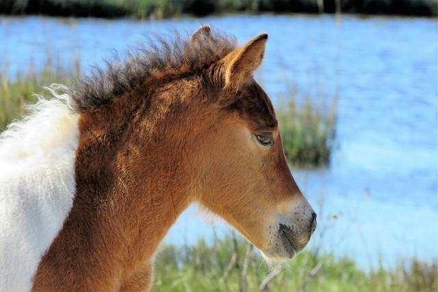 Painted Pony Portrait