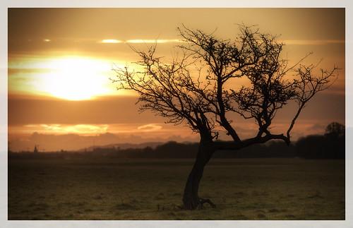 tree dublin phoenix park city cloud sunrise nikon d5500