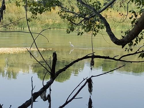 Lonely bird. Ebro river, Zaragoza (Spain) | by noemimartínezpérez