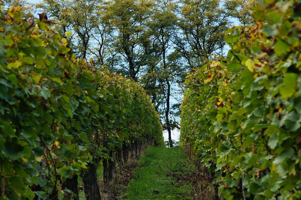 Vineyard & Trees / Weinberg & Bäume