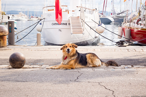 Making friends with the locals, Vieux Port | by like / want / need