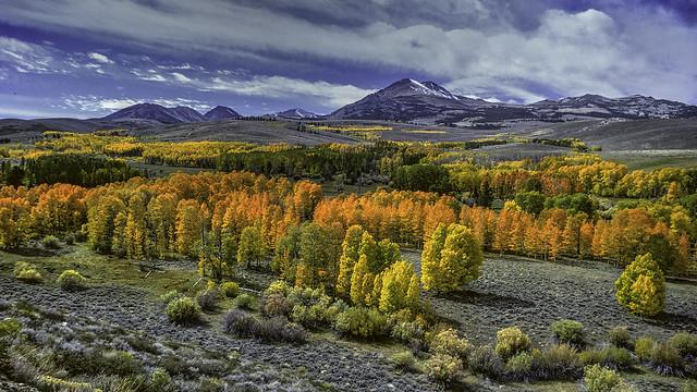 Autumn Along The Eastern Sierras