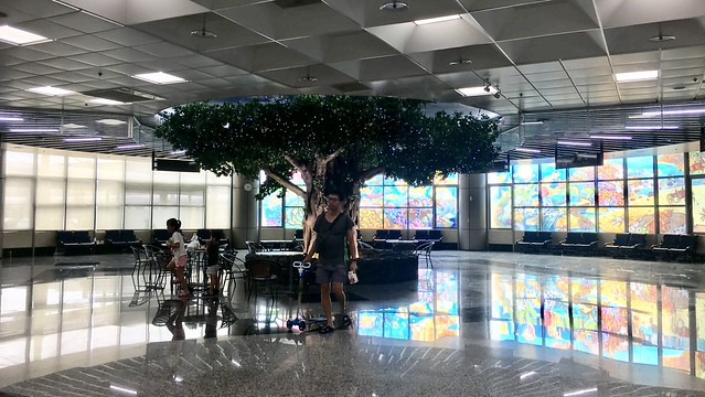A tree inside Penghu Magong Airport