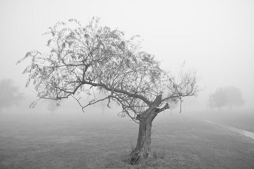 nature lockportny niagaracountyny nikond5200 fog