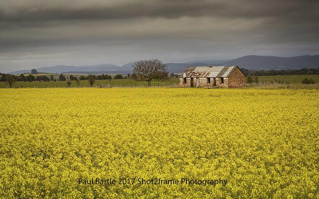 Tirrannaville Farm Canola - Southern Highlands - NSW