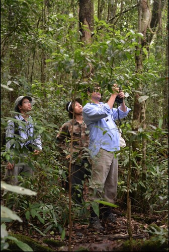 Thu, 10/19/2017 - 17:25 - Director of ForestGEO, Stuart Davies, and colleagues inside of the Bidoup Forest Dynamics Plot