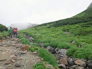 乗鞍岳 お花畑 登山道   by ichitakabridge