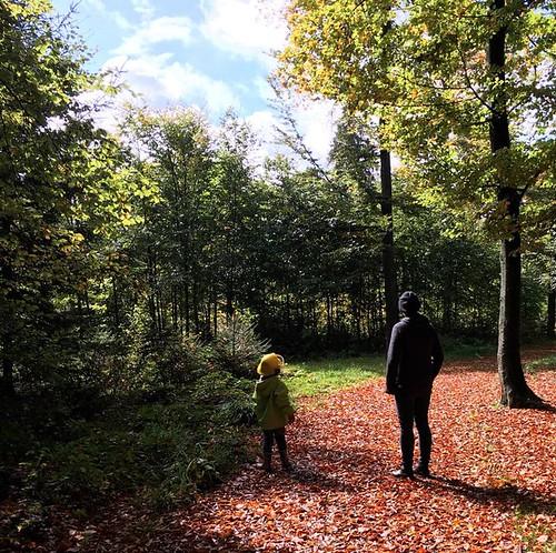 Herbst, da bist du ja! | by rretsiem