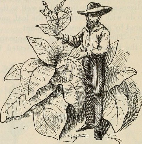 "Image from page 143 of ""Bulletin : report of Agricultural Experiment Station, Agricultural and Mechanical College, Auburn, Ala"" ([1888-1903]) 