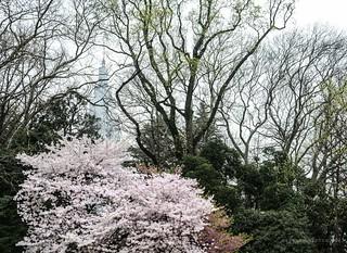 2015. Tokyo. Tokio.