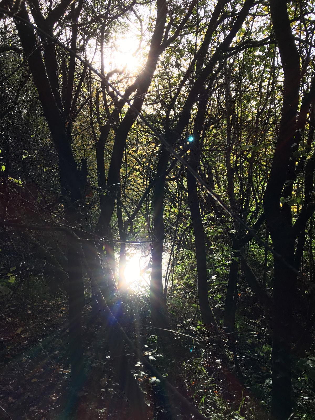 6 Ashurst Circular Walk