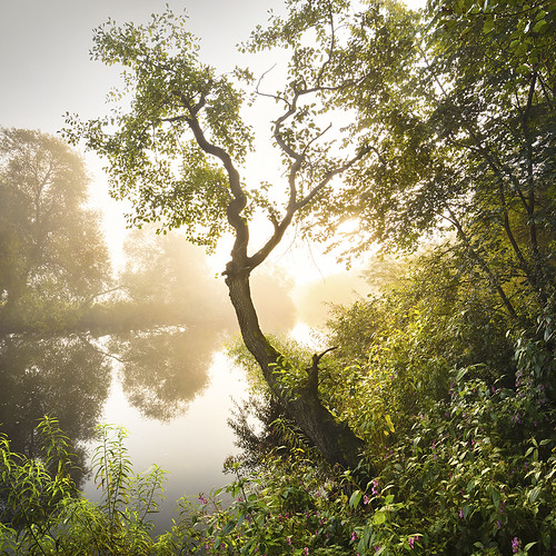river wharf wharfedale otley poolinwharfedale dales sunrise trees mist fog atmospheric knotfordnook