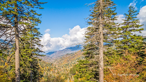 augphotoimagery autumn fall mountains nature outdoors scenic trees gatlinburg tennessee unitedstates