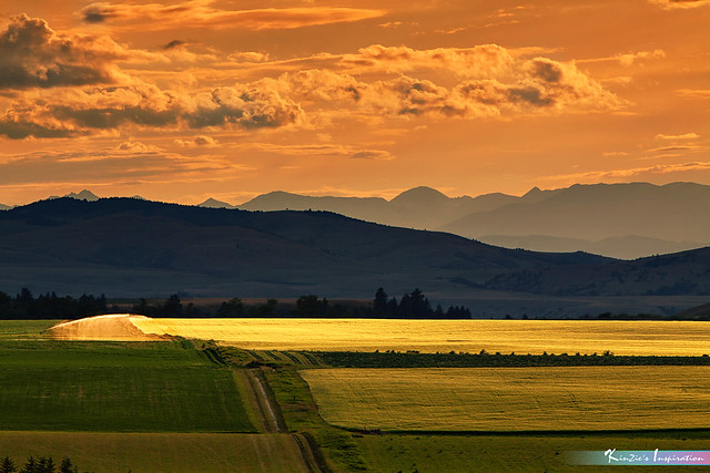 Scenic View of Corn Field & Mountain Layers in Sunset *A Beautiful Nature*