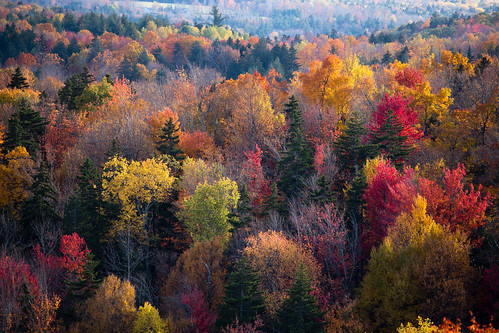 vermont fall color colour tree wood autumn leaves forest red yellow orange gree